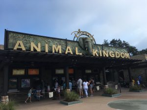 Disney World - Animal Kingdom